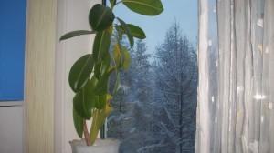 Пальма, окно, деревья в снегу