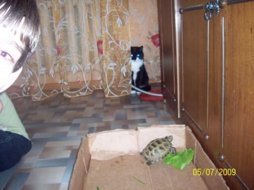Чевостики завели черепаху