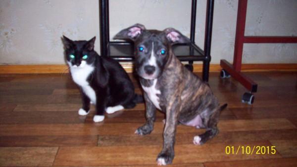 Кот Боня и собака Ая