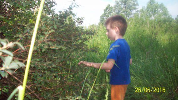 Егор собирает ягоду