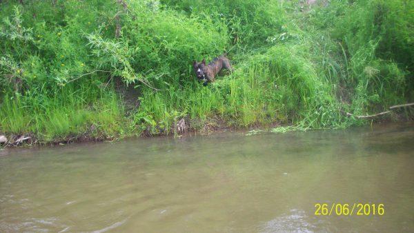 Ая боялась войти в воду