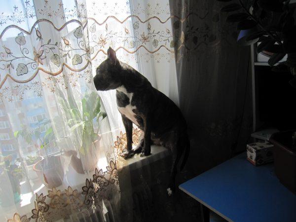 Собака глядит в окошко