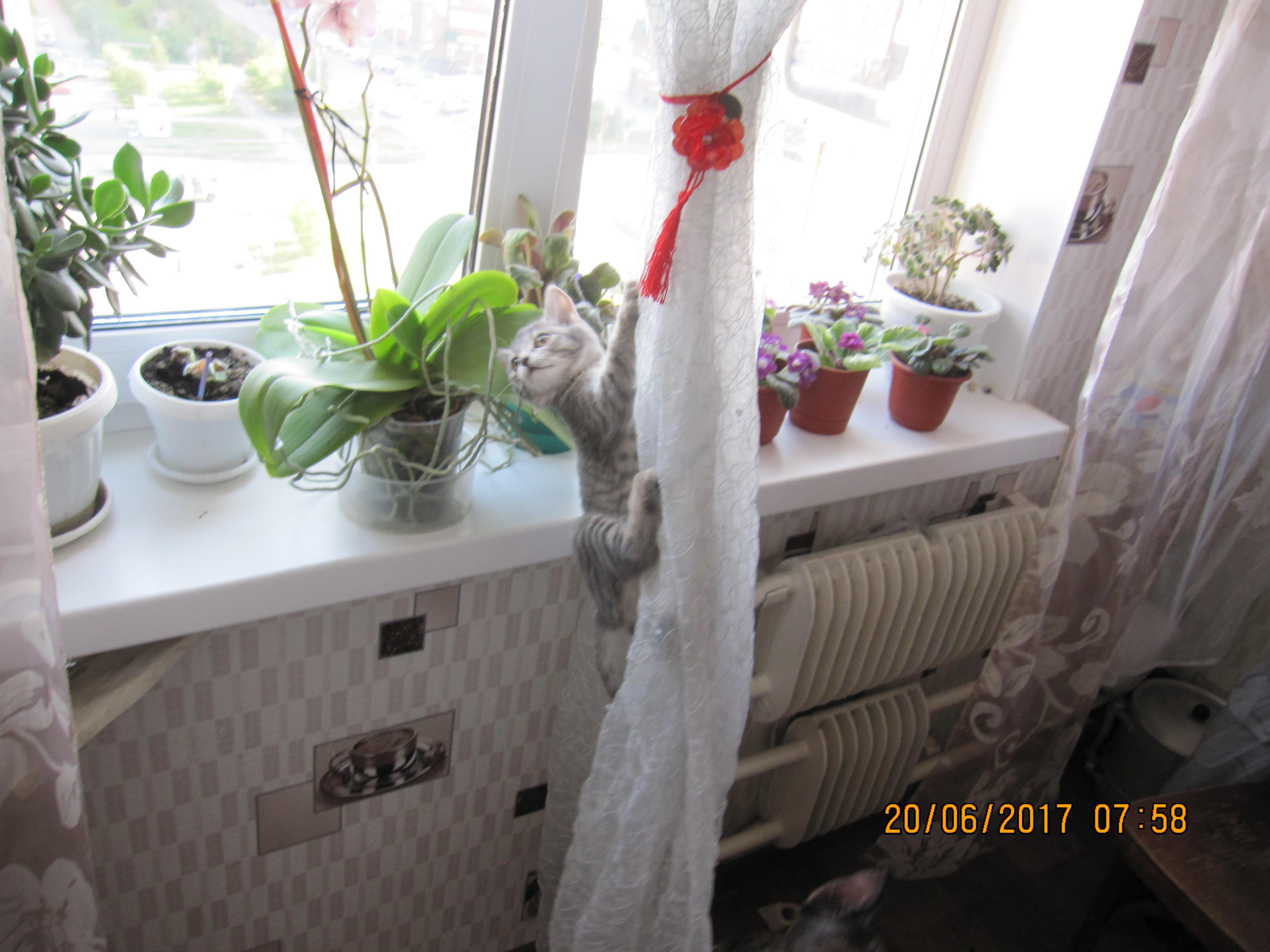 Кошка на шторе